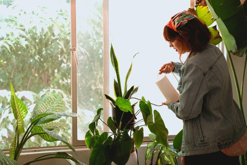 Regar nuestras plantas en vacaciones: opciones de riego para las plantas de casa