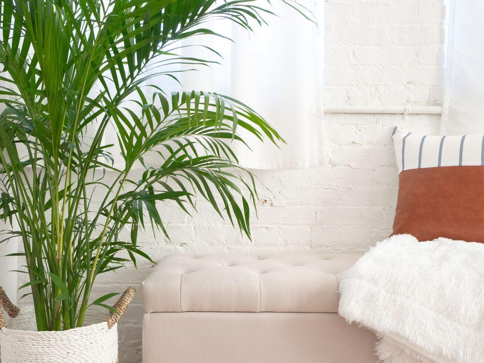 Plantas de hoja verde: palm areca